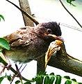 BirdIn.jpg