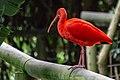 Birds of Eden-1568.jpg