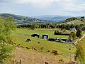 Blackmuir Wood - panoramio (10).jpg