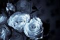 Blue Roses2.jpg