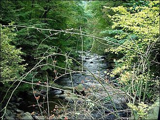 Bode (river) - The upper course of the Bode near Treseburg as it enters the Bode Gorge Nature Reserve