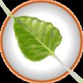 Bodhi Leaf.png
