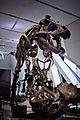 Bones (2370701922).jpg