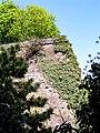 Bonn-alter-zoll-2004-08.jpg