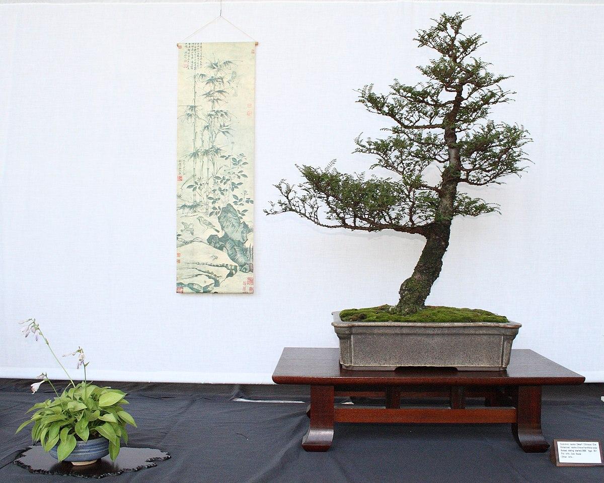 Bonsai display with Seiju elm, miniature hosta and hanging scroll, 12 July 2009.jpg