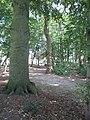 Bos bij Barneveld Noord (31168249352).jpg