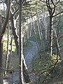 Boscombe Chine Gardens, path through pines - geograph.org.uk - 619578.jpg