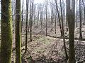 Bosque del señorío de Bértiz -01.JPG