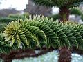 Botanical Garden January 2010 (4263630213).jpg