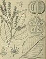 Botanische Jahrbücher für Systematik, Pflanzengeschichte und Pflanzengeographie (1911) (19782148243).jpg