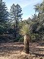 Boynton Canyon Trail, Sedona, Arizona - panoramio (5).jpg