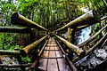 Bridge Over The Waterfall In Forest (183971749).jpeg