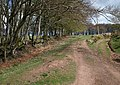 Bridleway at head of Little Quantock Combe - geograph.org.uk - 1278750.jpg