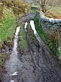 Bridleway near Graeanllyn - geograph.org.uk - 1376356.jpg
