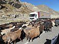 Bringing the herds home (3) (32432740352).jpg