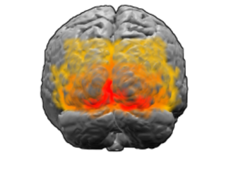 Visual cortex - View of the brain from behind. Red = Brodmann area 17 (primary visual cortex); orange = area 18; yellow = area 19
