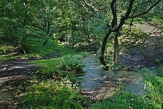 Margam - Brombil Woods