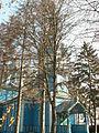 Bubnivka Church 3 Ukraine.JPG