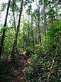 Buchholzer Forst Waldweg 02.JPG