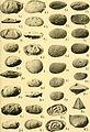 Bulletins of American paleontology (1953-1955) (20315090908).jpg