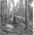 Bundesarchiv Bild 183-1982-0326-004, Beseitigung von Schneebruchschäden.jpg