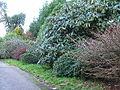 Burncoose Gardens, nr Gwennap - geograph.org.uk - 88907.jpg