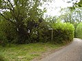Burscombe lane, foot path - geograph.org.uk - 1490223.jpg