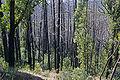 Bushfire damage.jpg