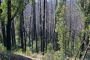 Bushfire regrowth in Australia, 2003; visually...