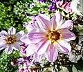 Butchart Gardens - Victoria, British Columbia, Canada (28906026670).jpg