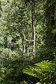 Bwindi Impenetrable National Park 08.jpg