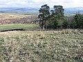 By Ulzieside Plantation - geograph.org.uk - 394761.jpg