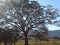 CABAÑA DON VILLA - panoramio - villamayors (12).jpg