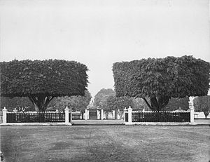 Alun-alun - Wringin kurung kembar or the twin trimmed banyan trees enclosed within fences in the center of northern alun-alun of Yogyakarta, circa 1857