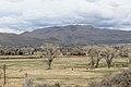 C Hill Trail , Carson City - panoramio.jpg
