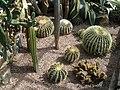Cactus 3 - geograph.org.uk - 1446419.jpg