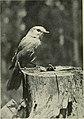 Camera studies of wild birds in their homes (1911) (14564975799).jpg