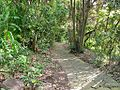 Camino entre los árboles - panoramio.jpg