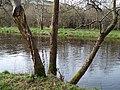 Camowen River - geograph.org.uk - 1196605.jpg