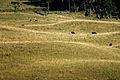 Campos de Cima da Serra 2.jpg