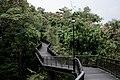 Canopy Walk, Southern Ridges.jpg