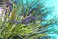 Capetown - Two Oceans Aquarium IMG 9457.JPG