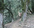 Castle Rock State Park in California view looking down hill.JPG