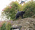 Cat, Dartmouth - geograph.org.uk - 827390.jpg