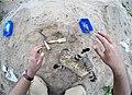 Cat-Excavations in Kosiorow.jpg