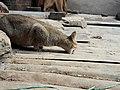 Cat 20190112 134457.jpg