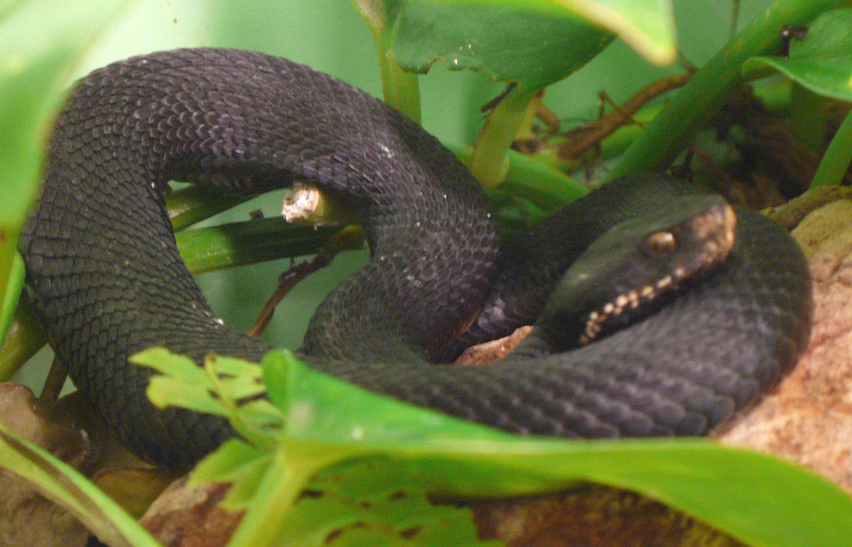 ресторан, ядовитые змеи обитающие в краснодарском крае Германии