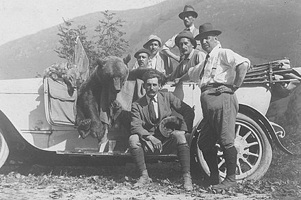 Spanish hunters posing with an Iberian wolf and a Cantabrian brown bear hunted in a Driven Hunt in Picos de Europa. Cazeria regia en Picos de Europa (1).jpg