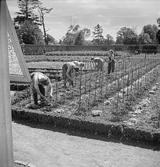 Cecil Beaton Photographs- Women's Horticultural College, Waterperry House, Oxfordshire, 1943 DB246.jpg
