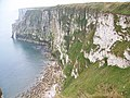 Chalk cliffs at Bempton - geograph.org.uk - 604831.jpg